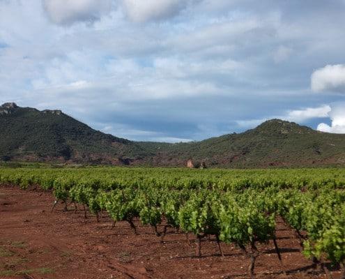 Randonnée vignerone hérault